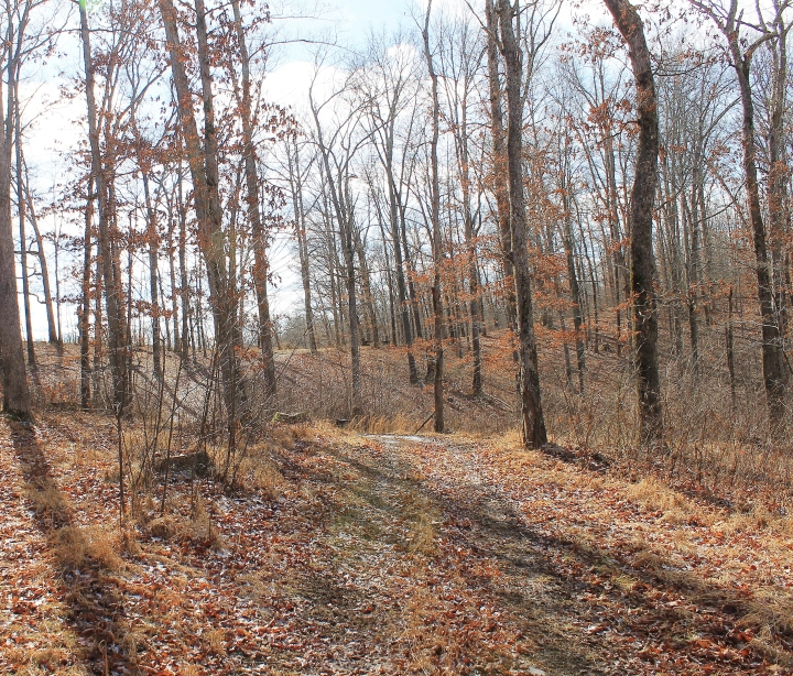 Logging Trail 2