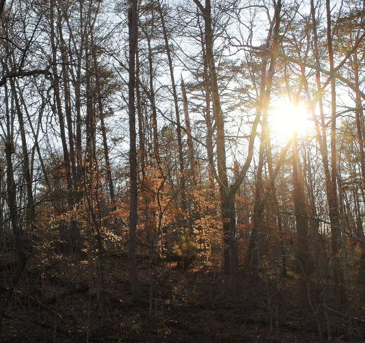Sun in the Forest.jpg