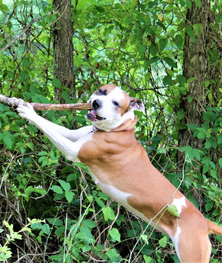 Lucy and the Stick.jpg