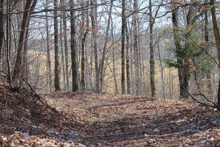 Logging Trail